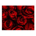 Postal de la elegancia del rosa rojo