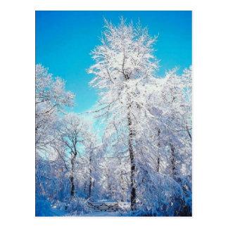 Postal de la escena del invierno