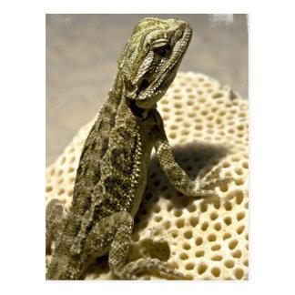 Postal de la especie del lagarto