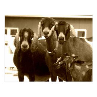 Postal de la familia de la cabra