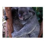 Postal de la familia de la koala