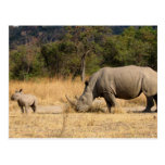 Postal de la familia de rinoceronte