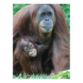 Postal de la familia del orangután