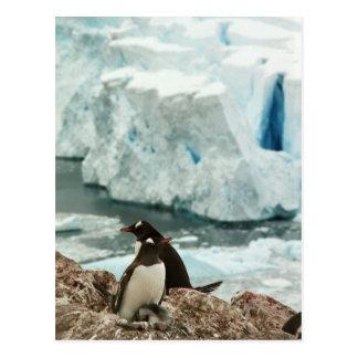 Postal de la familia del pingüino de Gentoo