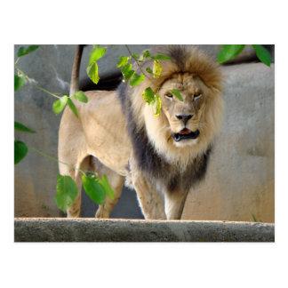 Postal de la fauna del león