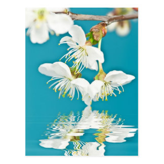Postal de la flor de cerezo