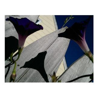 Postal de la flor de la correhuela