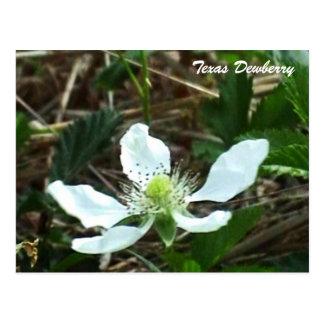 Postal de la flor de la mora ártica