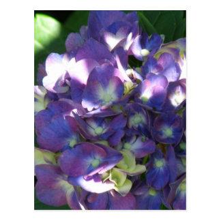 Postal de la flor del Hydrangea