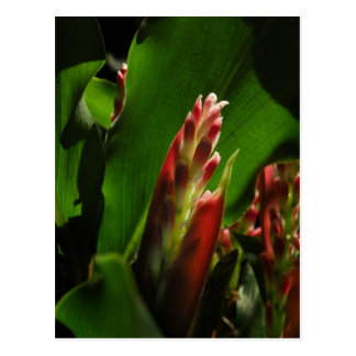 Postal de la flor del jengibre de la hierbabuena