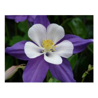 Postal de la flor púrpura y blanca de Columbine