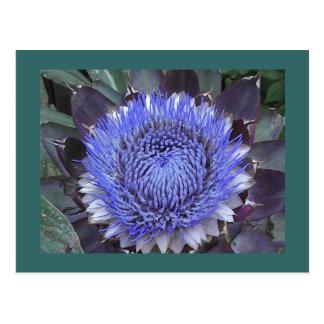 Postal de la floración de la alcachofa