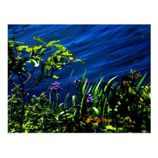 Postal de la floración de la orilla del lago