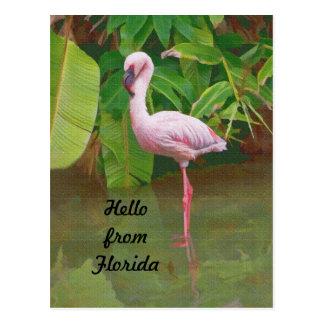 Postal de la Florida con el flamenco rosado