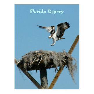 Postal de la Florida Osprey