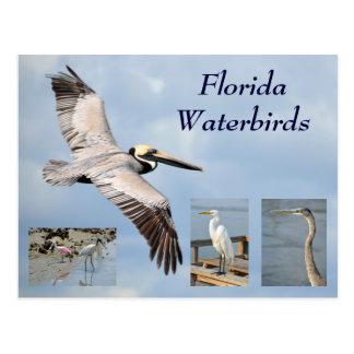 Postal de la Florida Waterbirds