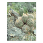 Postal de la foto de Arizona del Sonora del cactus