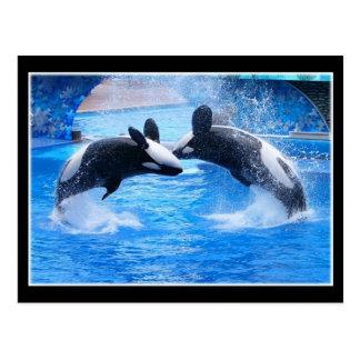 Postal de la foto de la ballena