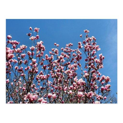 Postal de la foto de la flor del cielo azul de las