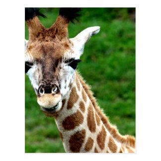 Postal de la foto de la jirafa