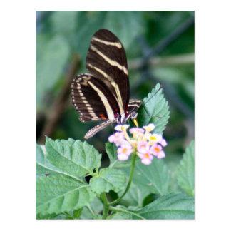 Postal de la foto de la mariposa de Longwing de la