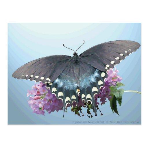 Postal de la foto de Spicebush Swallowtail