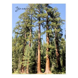 Postal de la foto del árbol de la secoya del parqu