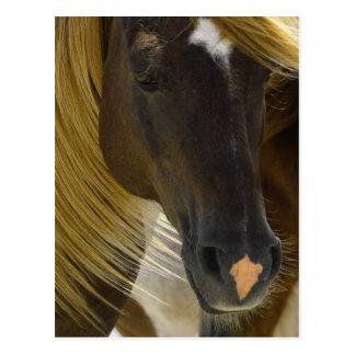 Postal de la foto del caballo del mustango