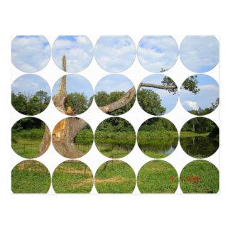 Postal de la foto del círculo