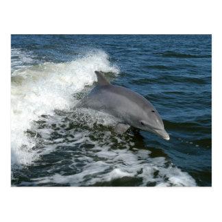postal de la foto del delfín de bottlenose