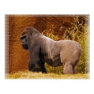 Postal de la foto del gorila del Silverback