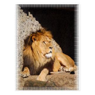 Postal de la foto del león