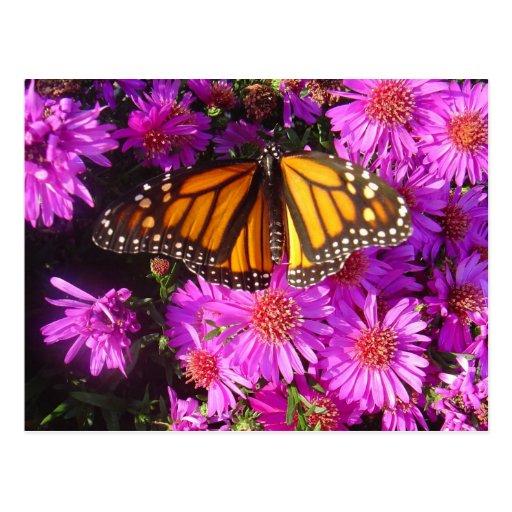 """Postal de la foto del """"monarca de migración"""""""