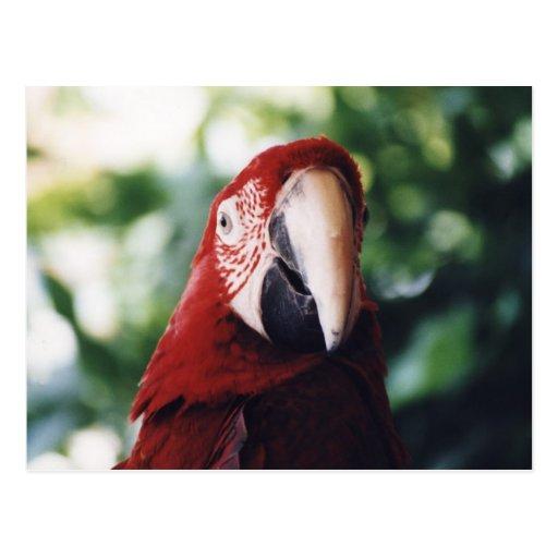 """Postal de la foto del pájaro """"del Macaw con alas v"""