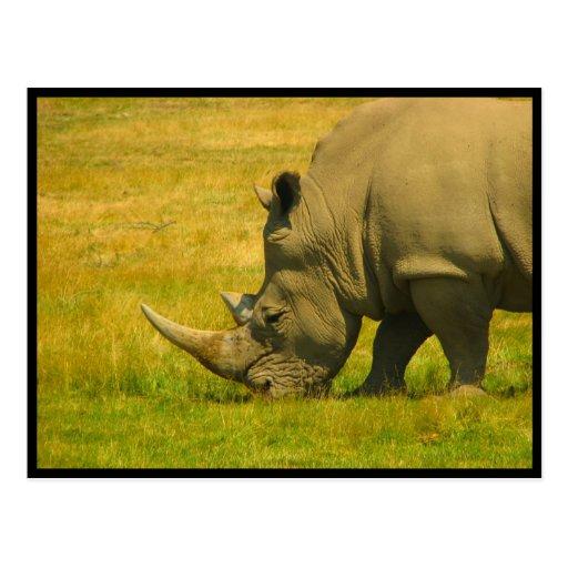 Postal de la foto del rinoceronte