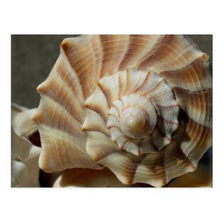 Postal de la fotografía de Shell del bucino del re