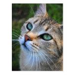Postal de la fotografía del gato de Tabby