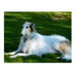 """Postal de la fotografía del perro del """"Borzoi"""""""