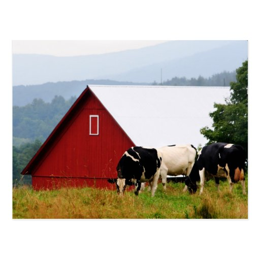 Postal de la granja de la vaca de Vermont