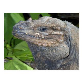Postal de la iguana