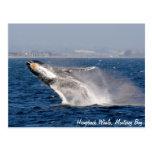Postal de la infracción de la ballena jorobada