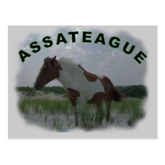 Postal de la isla de Assateague