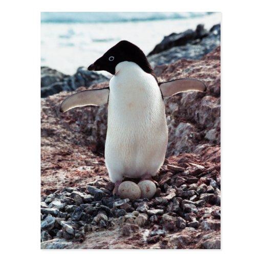Postal de la jerarquía del pingüino de Adelie