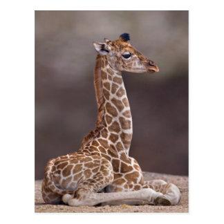 Postal de la jirafa del bebé