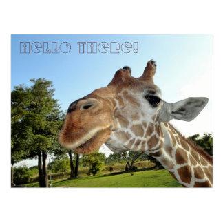 ¡Postal de la jirafa/hola allí! Tarjetas Postales