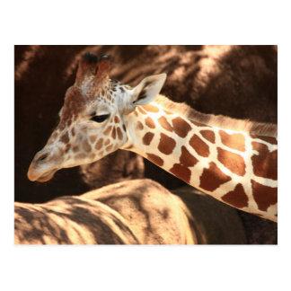 Postal de la jirafa