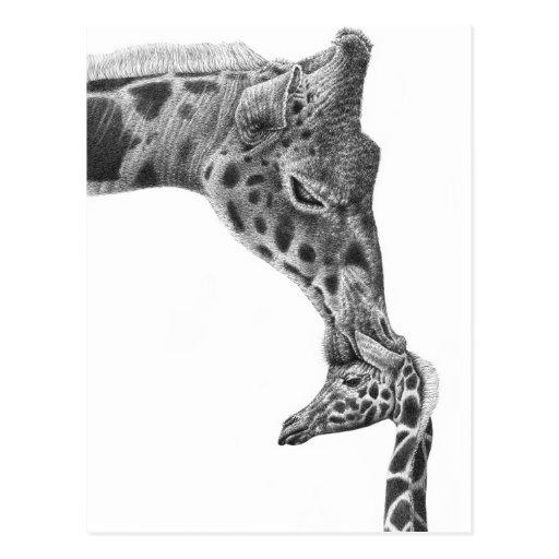 Postal de la jirafa y del becerro