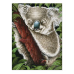 Postal de la koala el dormir