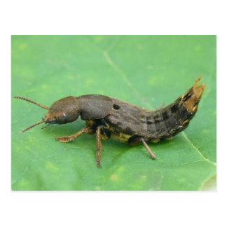 Postal de la larva del escarabajo de tierra