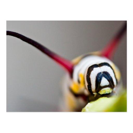 Postal de la macro de Caterpillar